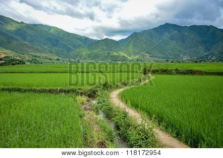 Rice Field And Mountain Landscape