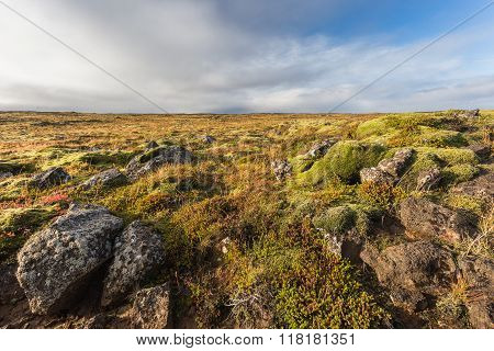 Iceland Colorful Nature, Stones, Green Moss. Sunny Day