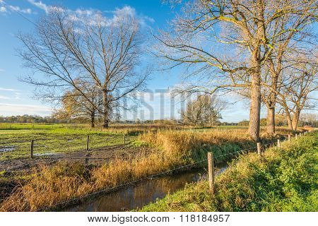 Picturesque Landscape In Autumn With Bare Trees