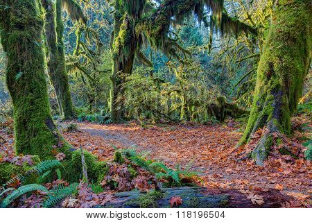 Hoh Rainforest view, Hall of mosses