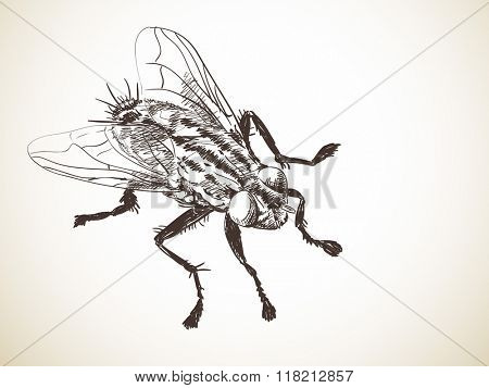 Sketch of fly, Hand drawn illustration