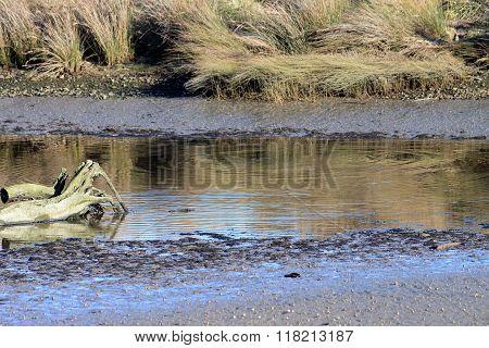 Estuary Pond
