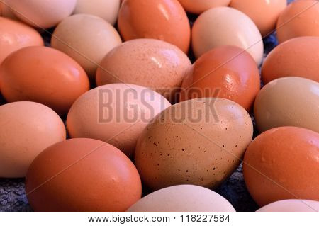 Brown Yard Eggs, Wet