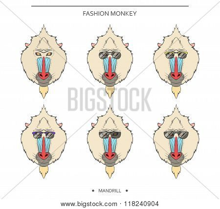 Isolated set monkey muzzles in linear style and different glasses