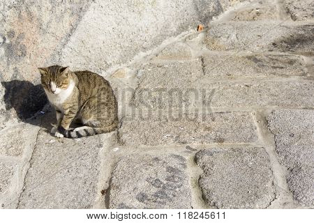 cat feline animal slepping sun shadow