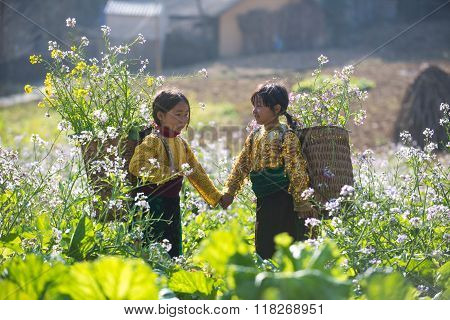Unidentified ethnic minority kids in a field of rapeseed flower in Hagiang, Vietnam.