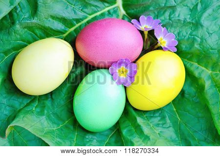 Colored Easter Eggs With Violet Flowers