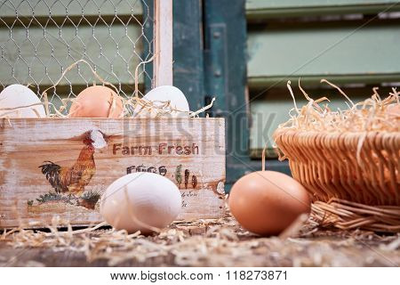 Side View Of Eggs With Egg Box