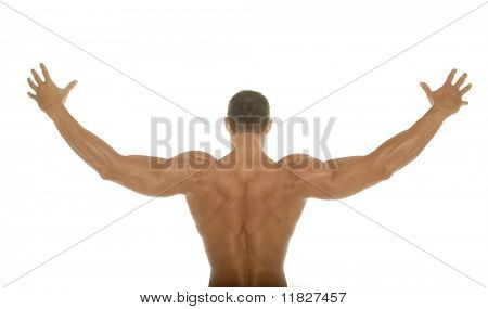 Male body builder back