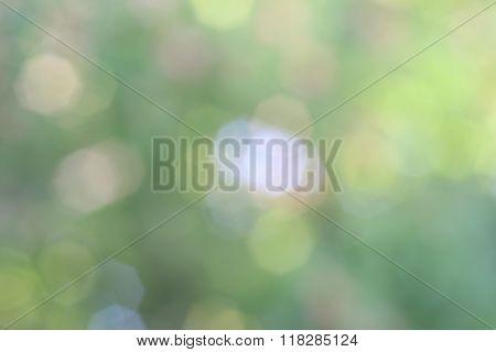 Green Bokeh Background