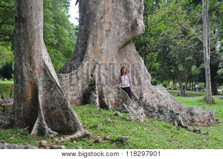Tourist Near Giant Tropical Tree