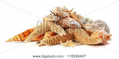 Seashells and coral isolated on white