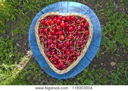 Ripe Cherries In Wicker Basket In The Yard