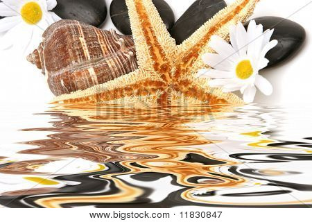 Starfish and spa obects on isolated white background