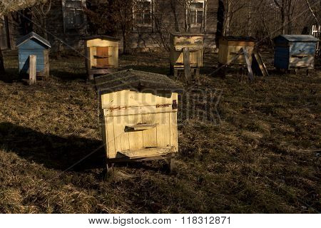 Color Bee Hives In Spring.