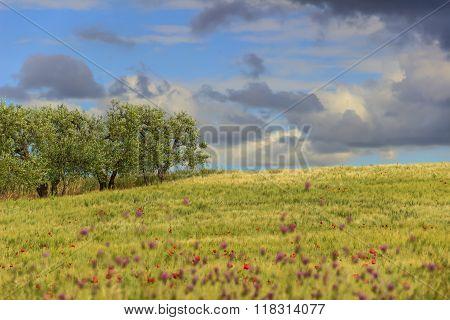 Rural landscape spring. Between Apulia and Basilicata