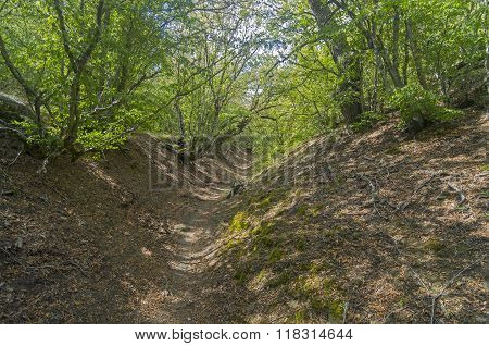Small Ravine In The Crimean Mountains.