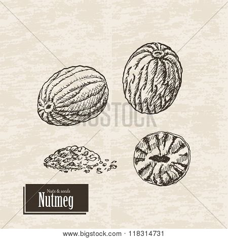 Vector background with nutmeg