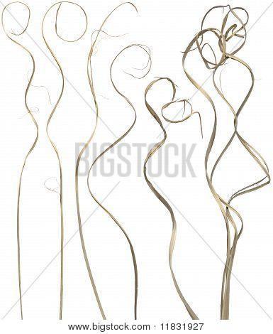 Curly Sticks