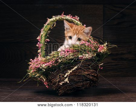 Funny, little kitty in a basket