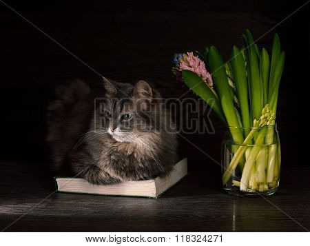 Cat, Book and bouquet of flowers - hyacinths