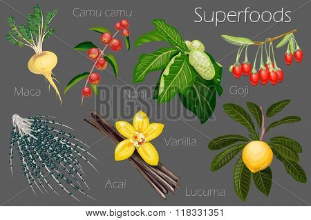 Vector illustration of a super food.