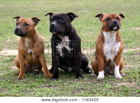 drei staffordshire