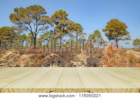 Outdoor Picnic Background With Wood Table.
