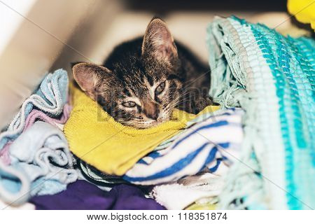 Cute Tabby Kitten Asleep In The Laundry