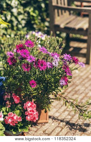 Colorful Potted Summer Flowers