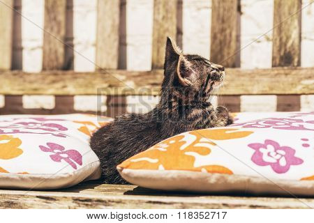 Little Kitten Snuggling Between Colorful Cushions