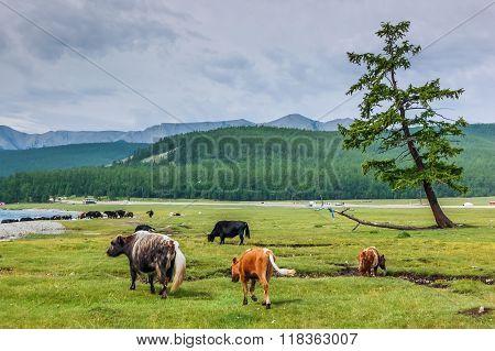 Khovsgol National Park, Mongolia