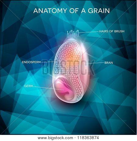 Grain strucure