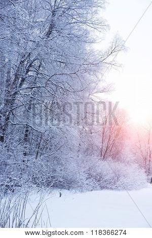 Winter background, landscape. Winter trees in wonderland. Winter scene. Christmas, New Year background