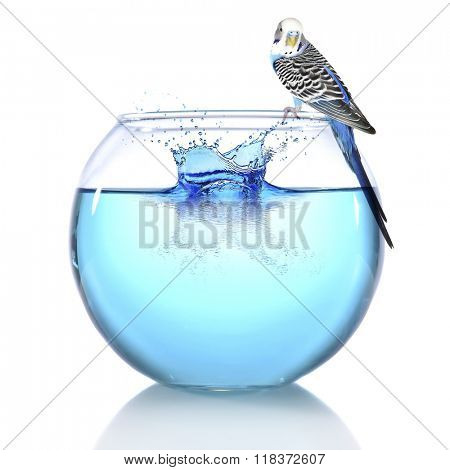 Fish bowl with water and little blue parrot on it isolated on white