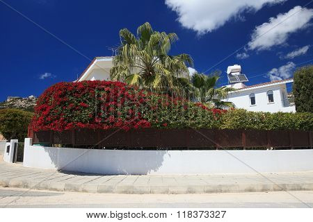 Beautiful Blooming Hedge Around The Villa.