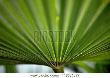 Green fan-shaped leaf