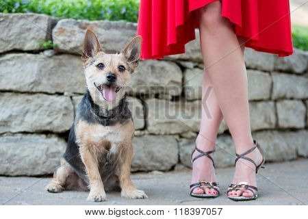 Happy Male Terrier Dog Outdoors With Female Owner