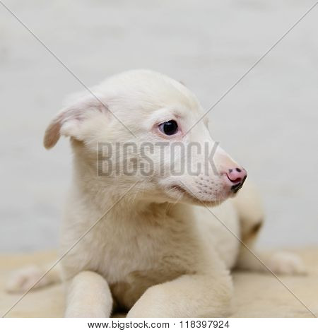 Homeless Puppy In Shelter