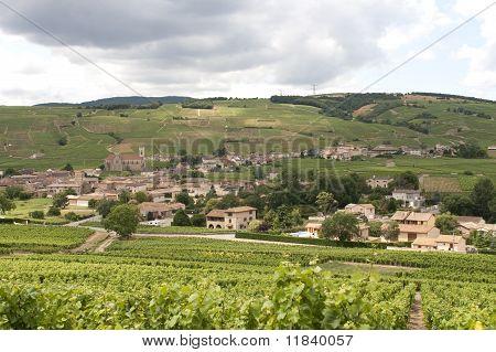 Vineyards In Burgendy Region