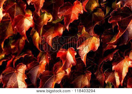 Creeping Leaves