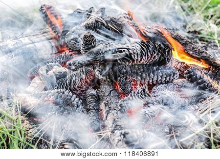 Nice view of burning pine cones in smoke and fire