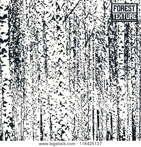 Birch Forest Texture