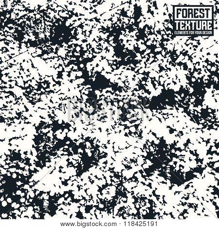 Deciduous Forest Texture