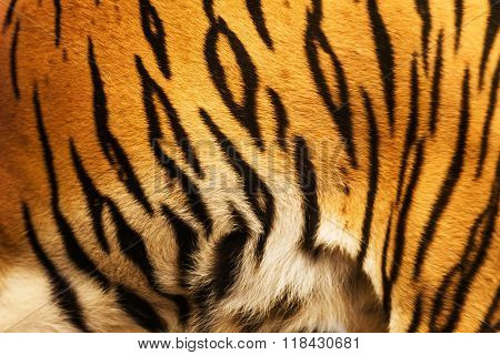 beautiful tiger fur - colorful texture with orange beige yellow and black