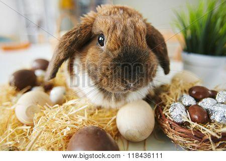 Easter pet