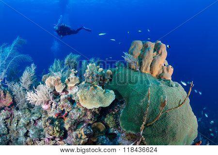 SCUBA Diver on a Caribbean Reef