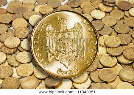 Gold Coin Modern