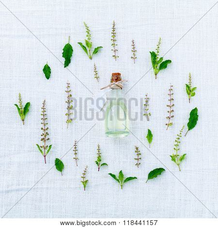 The Circle Of Fresh Holy Basil Flower And Holy Basil Leaves From The Garden On White Fabric Backgrou