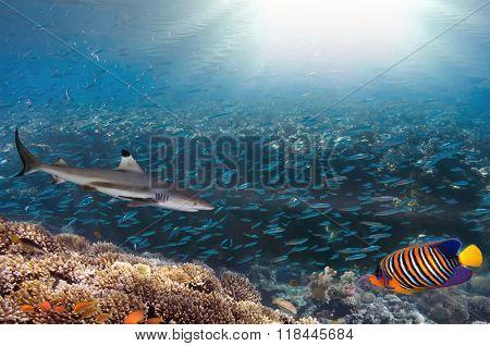 Sea Or Ocean Underwater Coral Reef